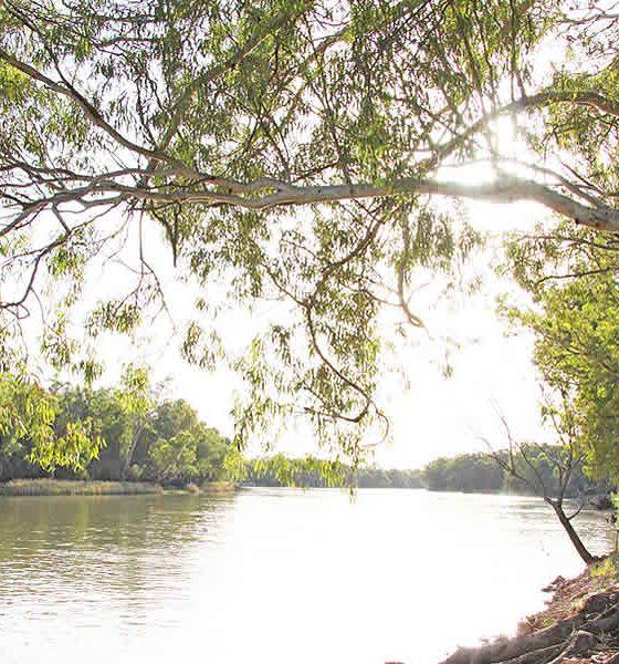 Murray River near Lock 10 Wentworth
