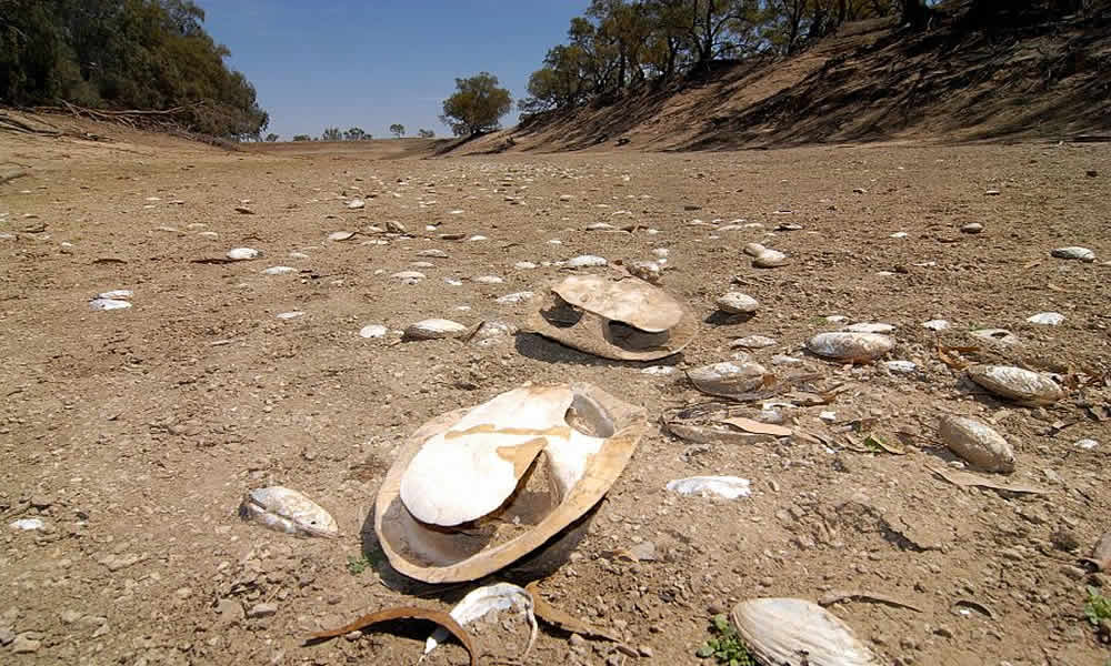 Dead Dry Fauna on the Dry Darling River